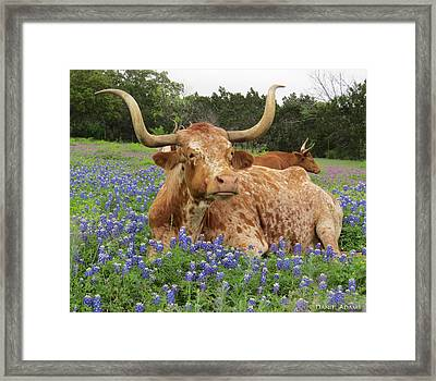 Da210 Longhorn In A Sea Of Bluebonnets By Daniel Adams Framed Print