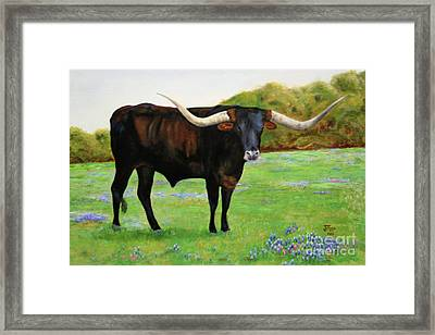 Longhorn In Bluebonnets Framed Print