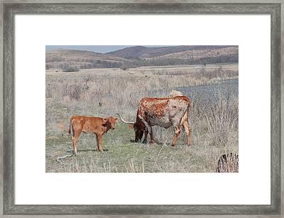 Longhorn Framed Print