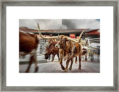 Longhorn Framed Print by Kelley King
