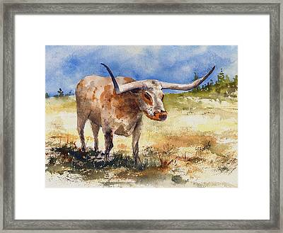 Longhorn Framed Print by Sam Sidders