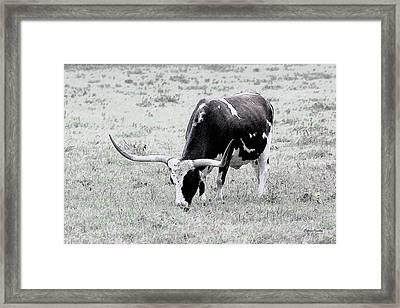Longhorn Sketch Framed Print