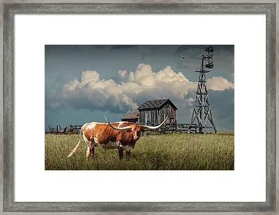 Longhorn Steer In A Prairie Pasture By Windmill And Old Gray Wooden Barn Framed Print