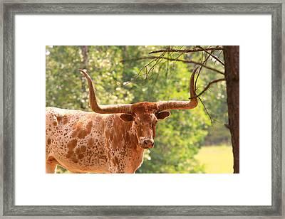 Longhorn Steer Framed Print by James Jones