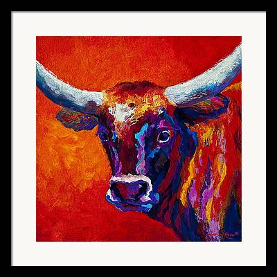Steer Framed Prints