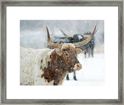 Longhorn Winter Framed Print by Mike Dawson