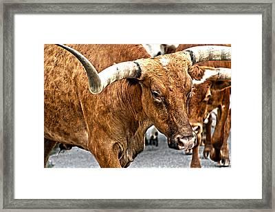 Longhorns Framed Print by Toni Hopper