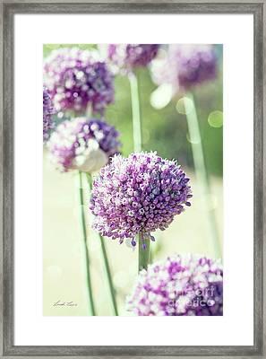 Longing For Summer Days Framed Print