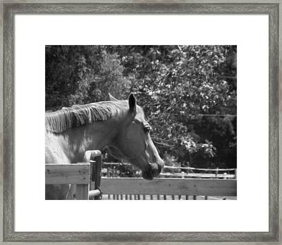 Framed Print featuring the photograph Longing by Sandi OReilly