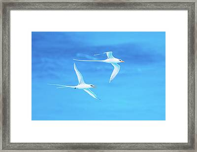 Longtail Dream Team Framed Print