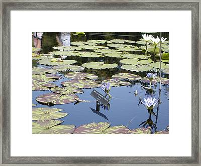Longwood Lillies Framed Print by Randy Ford