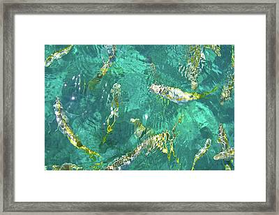 Looe Key Reef Framed Print by Charles Harden