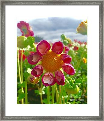 Look At Me Dahlia Framed Print by Susan Garren