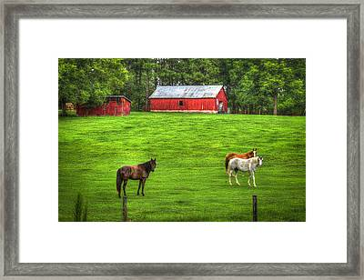 Look At Me Horses Framed Print by Reid Callaway