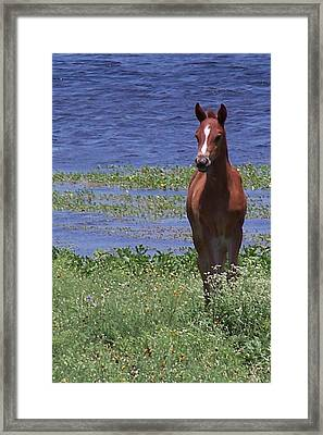 Look At Me Framed Print by Lilly King