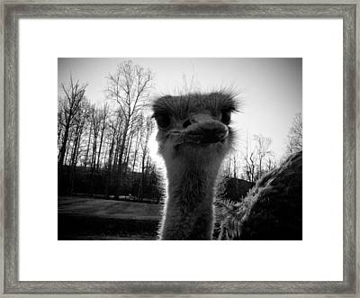 Look At Me Now Framed Print
