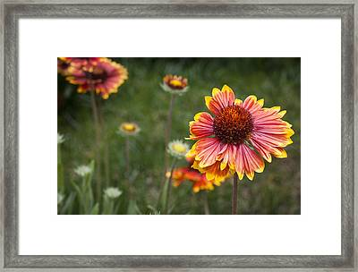 Look At What The Rain Gave Framed Print by Karen LeGeyt