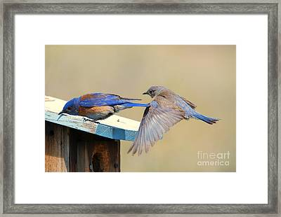 Look Behind You Framed Print by Mike Dawson