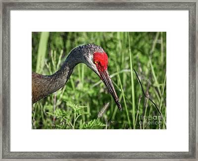 Look Down Crane Framed Print