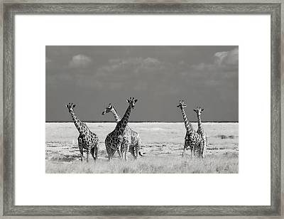 Look Girl Strange Animals Framed Print