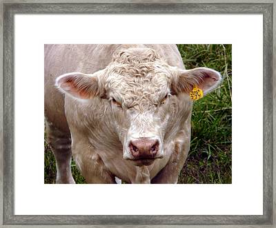 Look Here  Buddy Framed Print by Morning Dew