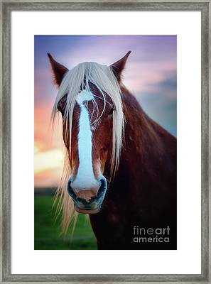 Wild Thing Framed Print by Tamyra Ayles