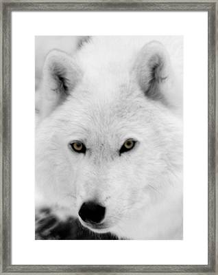 Look Into My Eyes Framed Print by Larry Ricker