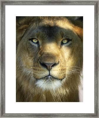 Look Into My Eyes Framed Print by Saija  Lehtonen
