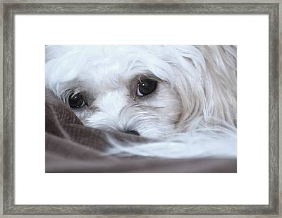 Look Into My Soul Framed Print