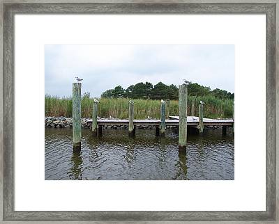 Look Left Framed Print by Kevin Callahan