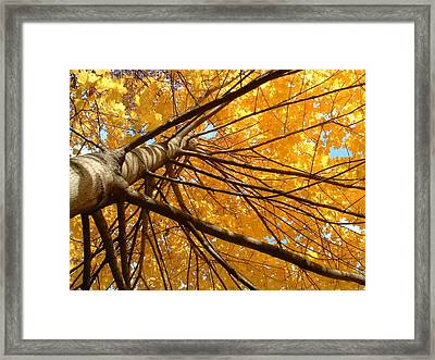 Look On The Bright Side  Framed Print by Andrea  Darlington