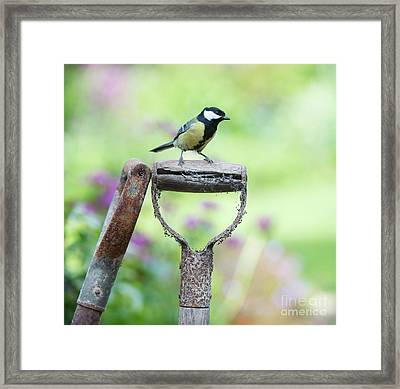 Look Out Framed Print by Tim Gainey