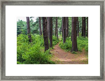 Look Park Nature Path Framed Print