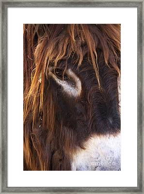 Look To Me Framed Print by Angela Doelling AD DESIGN Photo and PhotoArt