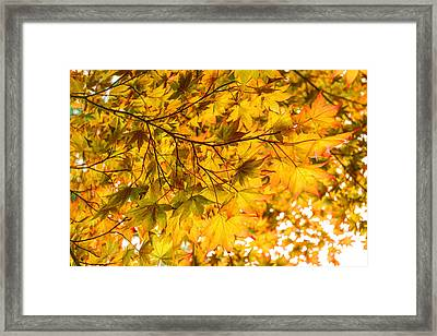 Look Up And Enjoy The Brilliant Autumn Colors Framed Print