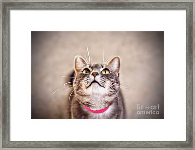 Look Up Framed Print by Charrie Shockey