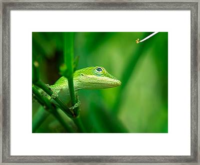 Look Up Lizard Framed Print
