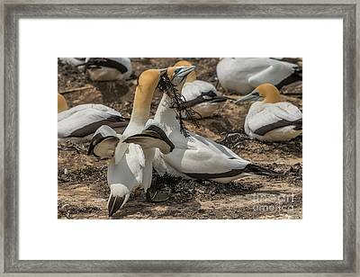 Look What I've Brought For You Framed Print