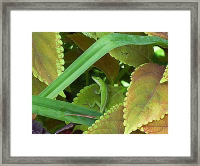 Look Who Is Hiding Framed Print by Sandy Collier