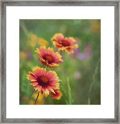 Framed Print featuring the photograph Look...a Flower by John Crothers