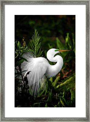 Lookin' For Love Framed Print