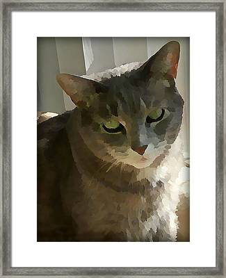 Looking Angelic Framed Print