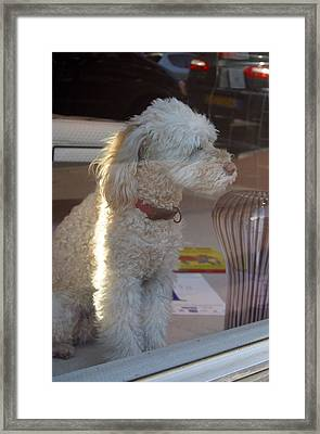 Looking At Me Framed Print by Jez C Self