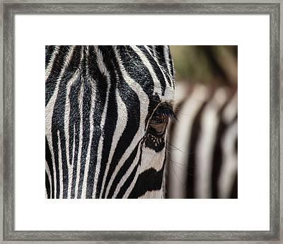 Looking At Me Framed Print