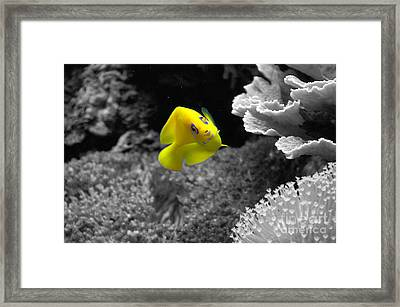 Framed Print featuring the photograph Looking At You by Deniece Platt