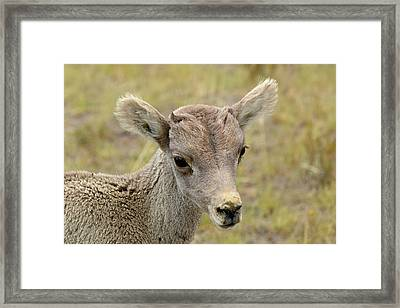 Framed Print featuring the photograph Looking At You Kid by Bruce Gourley