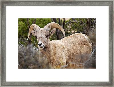 Looking At You Kid Framed Print by Larry Ricker