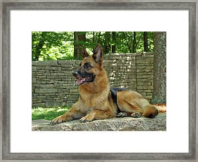 Looking Away Framed Print