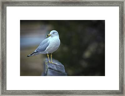 Framed Print featuring the photograph Looking Back  by Cindy Lark Hartman