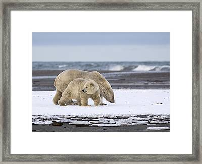 Looking Back In The Arctic Framed Print